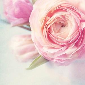 SIGEL Motivpapier Rose Garden Motiv DIN A4 90 g/qm 50 Blatt